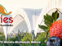 Congreso Internacional Aneberries 2014
